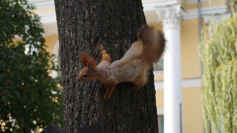 Foto van een eekhoorn op een boom stock fotografie