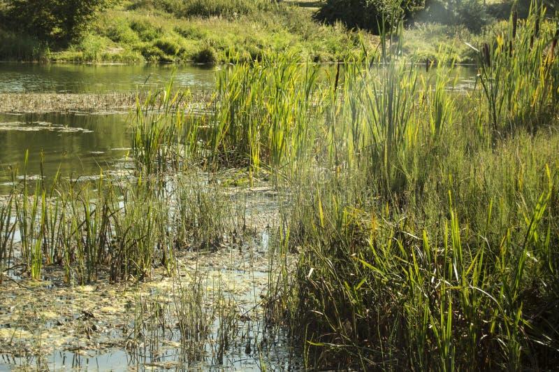 Foto van een grijze vijver, vijver, rivier Zonnezomerse natuur royalty-vrije stock foto's