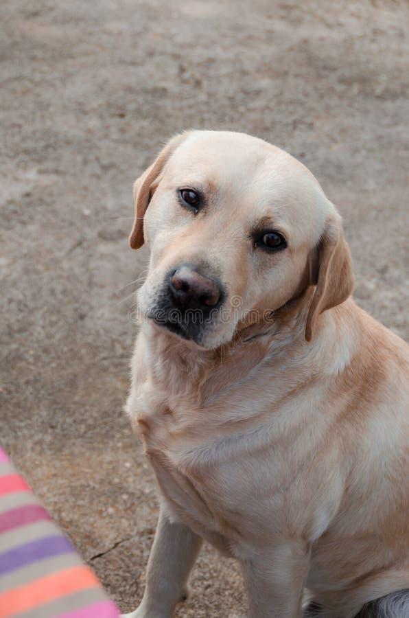 Foto van een hond in de huiswerf stock afbeelding