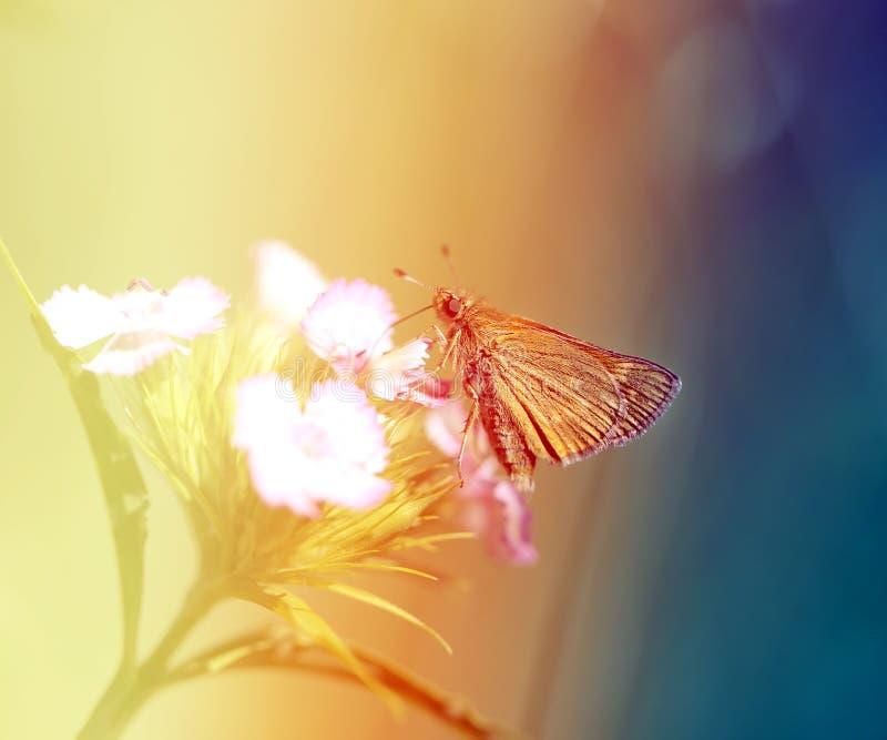Foto van een macro gouden vlinder stock afbeeldingen