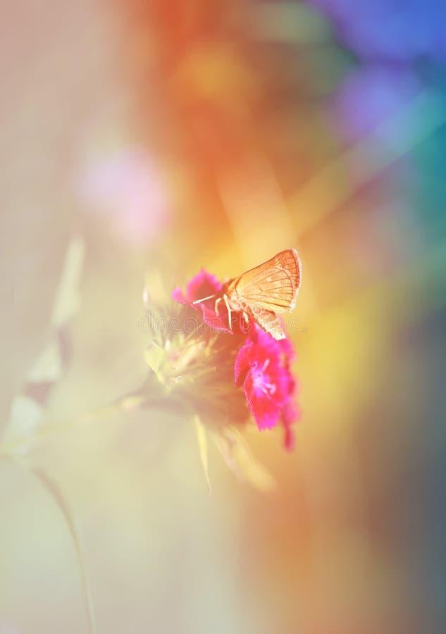 Foto van een macro gouden vlinder stock afbeelding