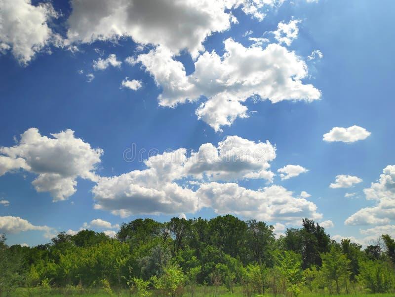 Foto van een mooi heet de zomerlandschap met bomen in de achtergrond en een blauwe hemel met witte wolken en zon die door glanzen stock foto's