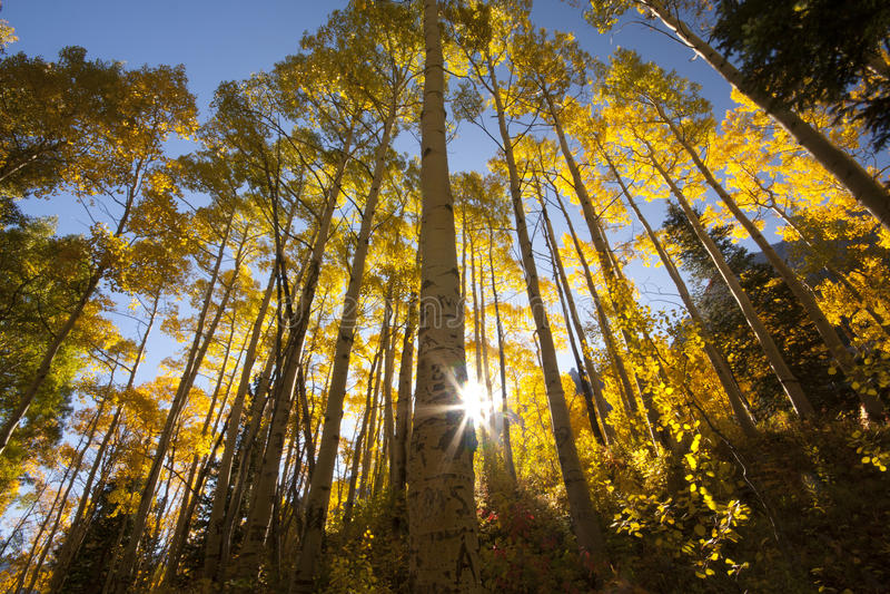 Foto van mooi dalingsseizoen in Colorado stock foto