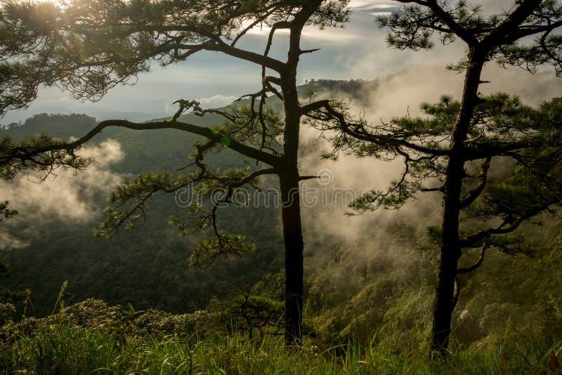 Foto van pijnboombomen op de bergen met mist royalty-vrije stock foto