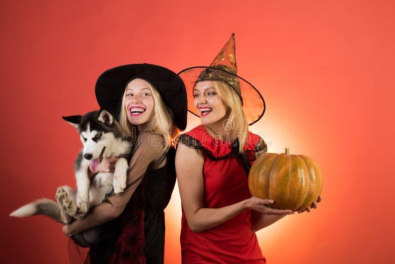 Foto van twee jonge wijfjes met Halloween-pompoen en weinig Schor hond, hebbend pret Twee gelukkige jonge vrouwen in zwarte en stock afbeeldingen