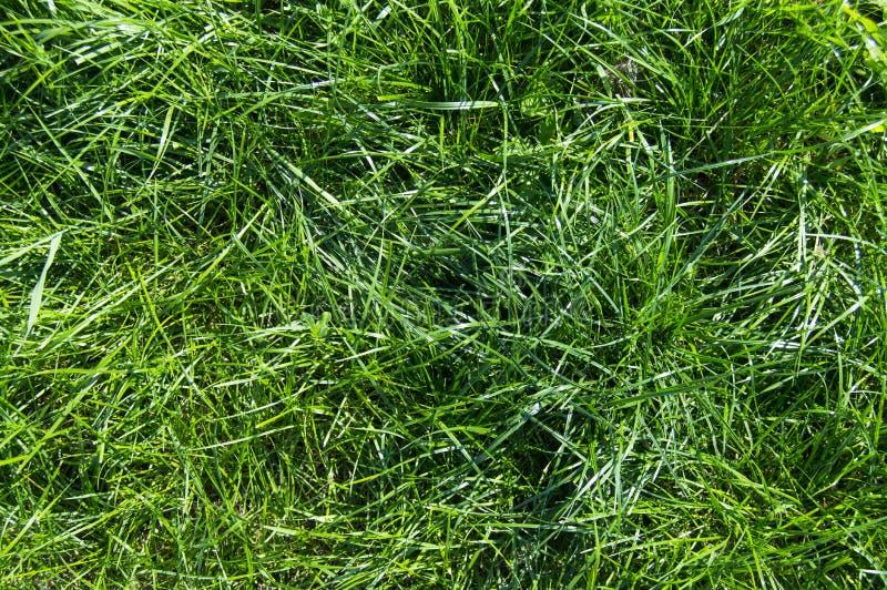 Foto van zomergras Lawn background royalty-vrije stock fotografie