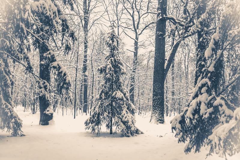 Foto velha do vintage Árvore de Natal mágica da opinião da paisagem do conto de fadas fantástico imagem de stock