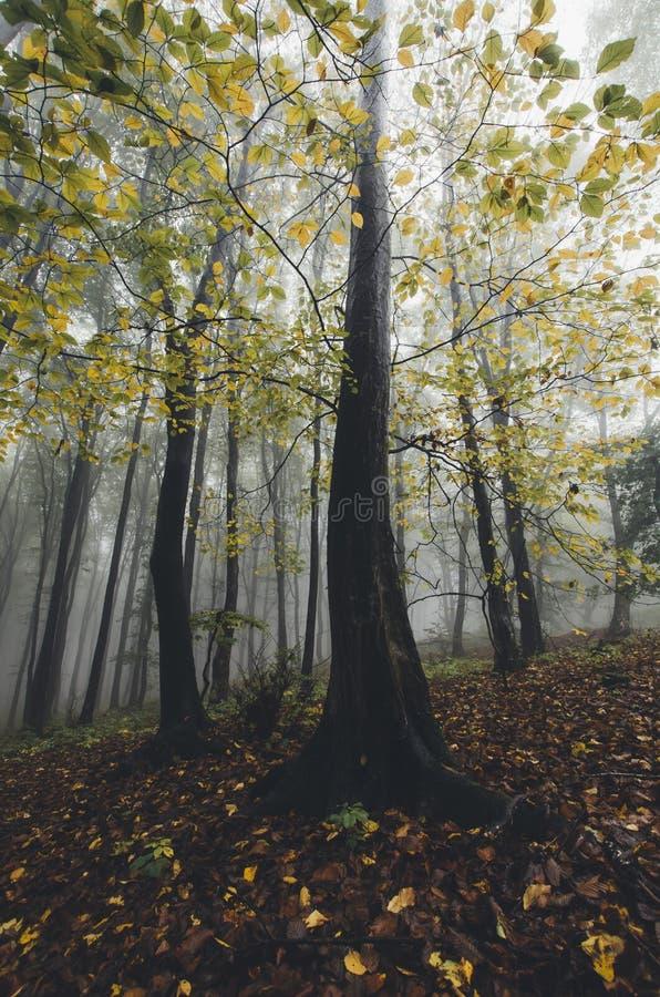 Foto vertical de árboles coloridos en bosque del otoño fotos de archivo