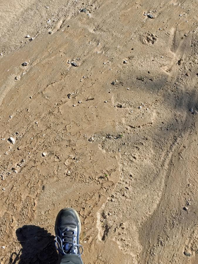 Foto vertical de un paso en un seco Sandy Riverbed foto de archivo libre de regalías