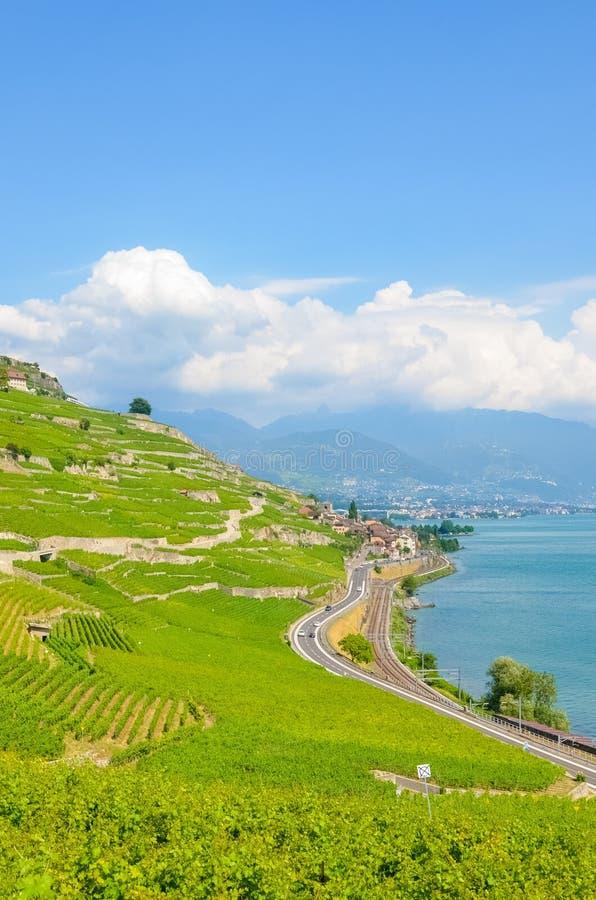 Foto vertical de vinhedos terraced bonitos em inclinações pelo lago Genebra em Suíça Região do vinho de Lavaux Campo su??o fotografia de stock