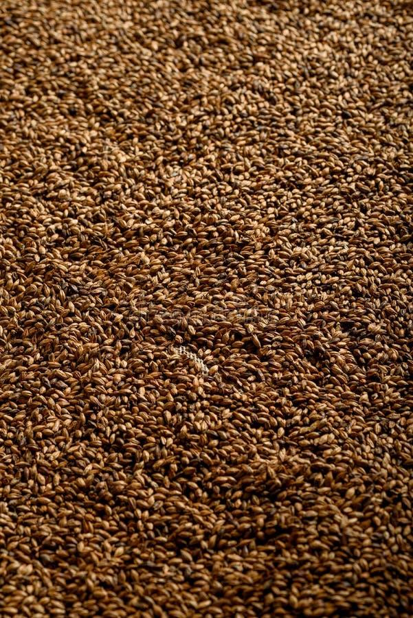 Foto vicina su dei grani del malto per le birre più scure immagini stock