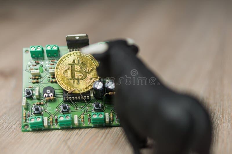 Foto von Bargeld Bitcoin oder Bitcoin auf elektronischer Schaltung, Computerteil und Stier nahe bei ihm lizenzfreies stockbild