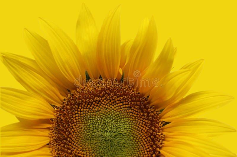 Fotodetail van aardige zonnebloem royalty-vrije stock foto