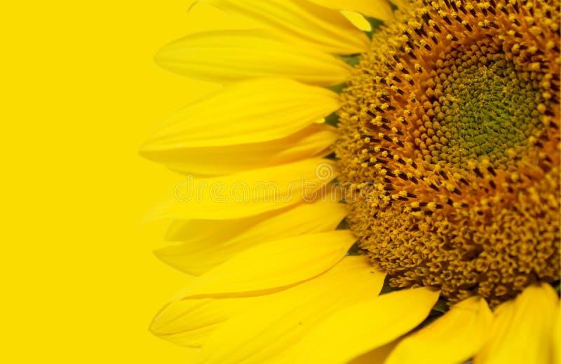 Fotodetail van aardige zonnebloem stock afbeeldingen