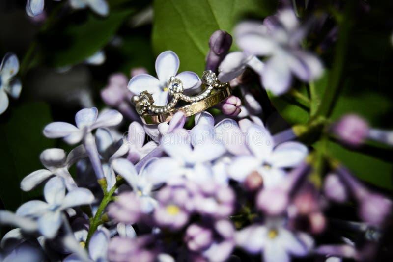 Fotoen för förälskelse för färg för nikon för blommor för Korona Krona` s börjar den lila fotografen royaltyfri bild