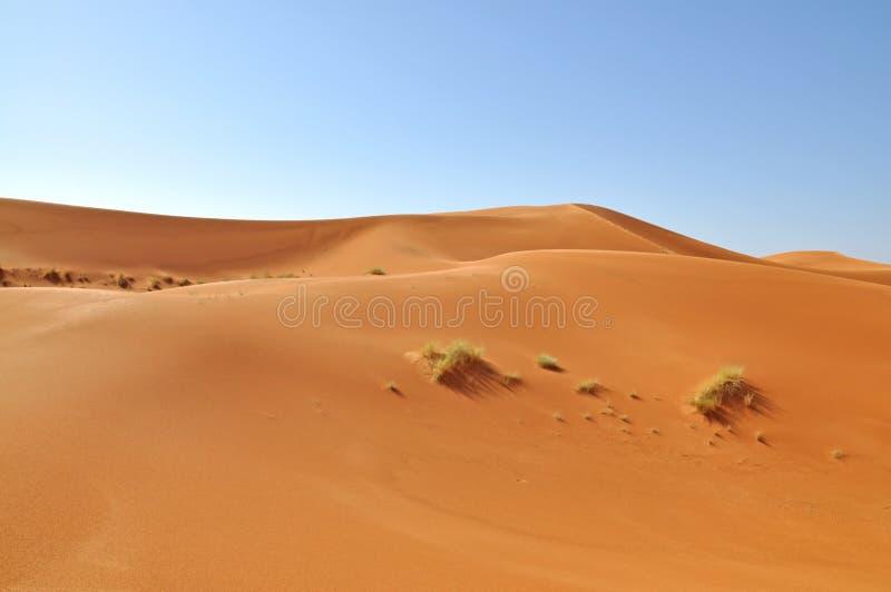 Sahara öken arkivfoto
