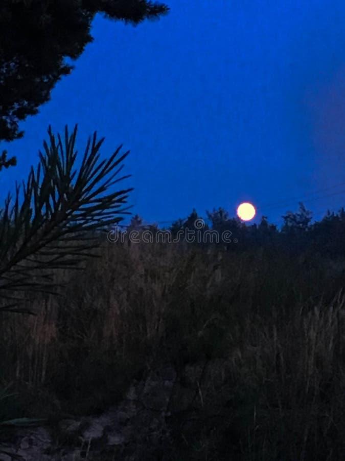 Fotoet av fullmånen på den blåa himlen Forest Scenery arkivbilder