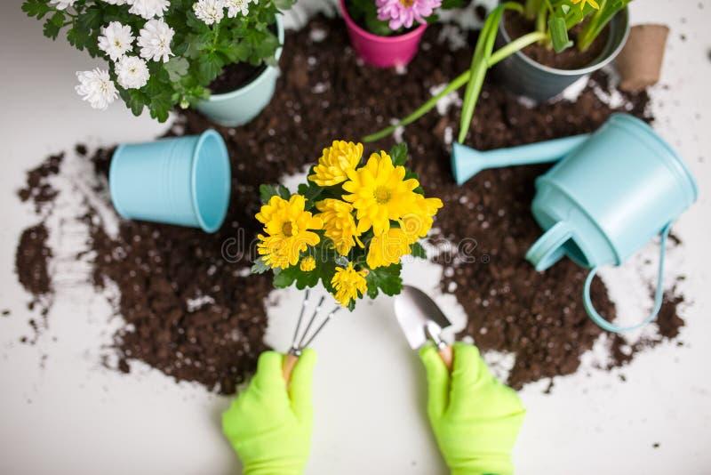 Fotoet av jord som bevattnar kan, blomkrukan, skyffel, att kratta, händer i gröna rubber handskar royaltyfri foto