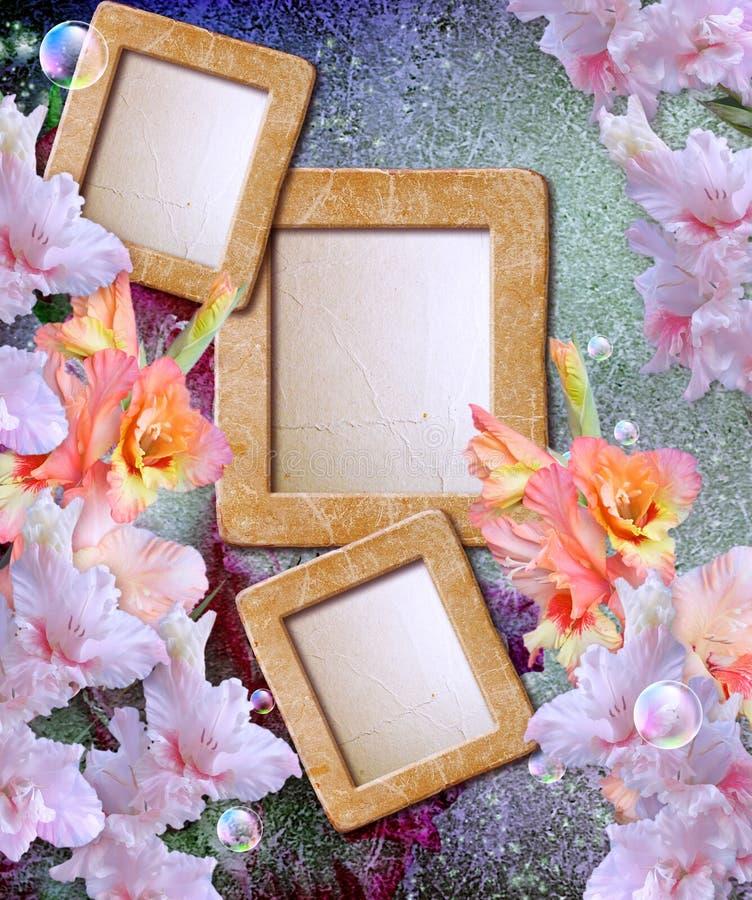 Fotoet inramar med gladiolusen royaltyfria foton