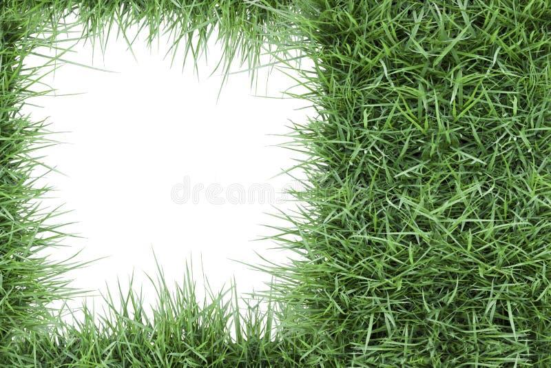 Fotofeld des grünen Grases lizenzfreies stockbild