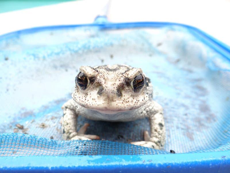 Fotogener Frosch stockbilder
