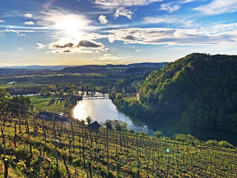 Fotogenieke wijngaarden en laaglandbossen in de Rijn-vallei, Buchberg stock afbeelding