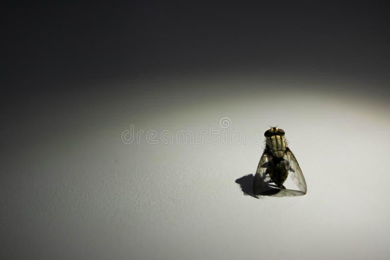 Fotogenisk flugastående med strålkastaren royaltyfria foton