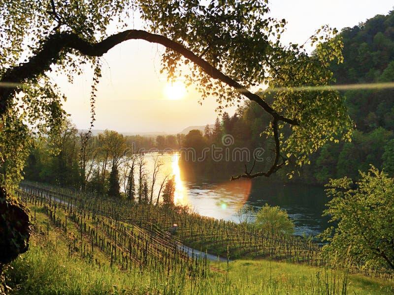Fotogeniska vingårdar och låglandskogar i Rhendalen, Buchberg arkivfoton