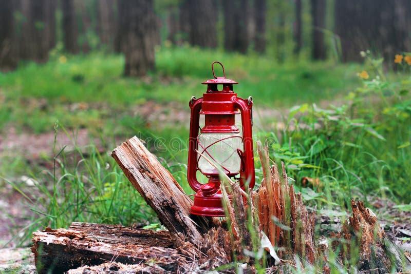 Fotogenlampa i skogabstrakt begreppfotoet arkivfoton