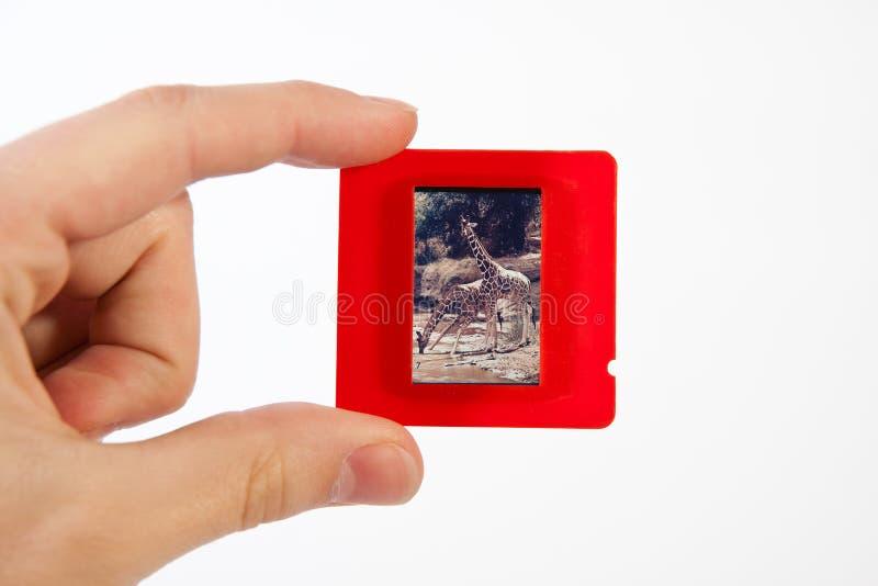 Fotoglidbanan räcker in arkivfoton