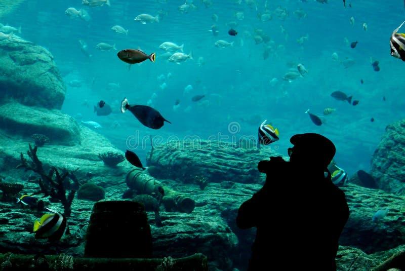Fotograaf bij aquarium royalty-vrije stock afbeelding