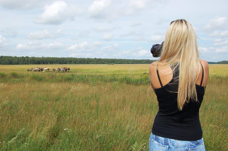 Fotograaf die beeld van wild paarden neemt royalty-vrije stock fotografie