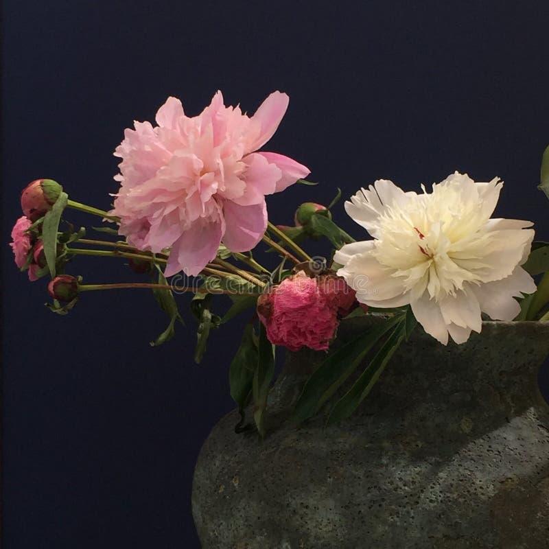 Fotografía de la decoración interior, pintura, aún vida, etc Flores hermosas foto de archivo