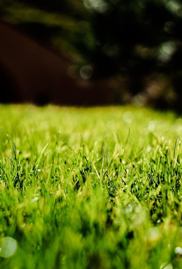Fotografía de la macro de la hierba fotos de archivo