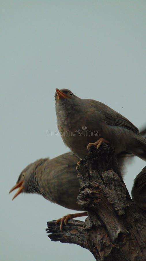 Fotografía de los pájaros foto de archivo