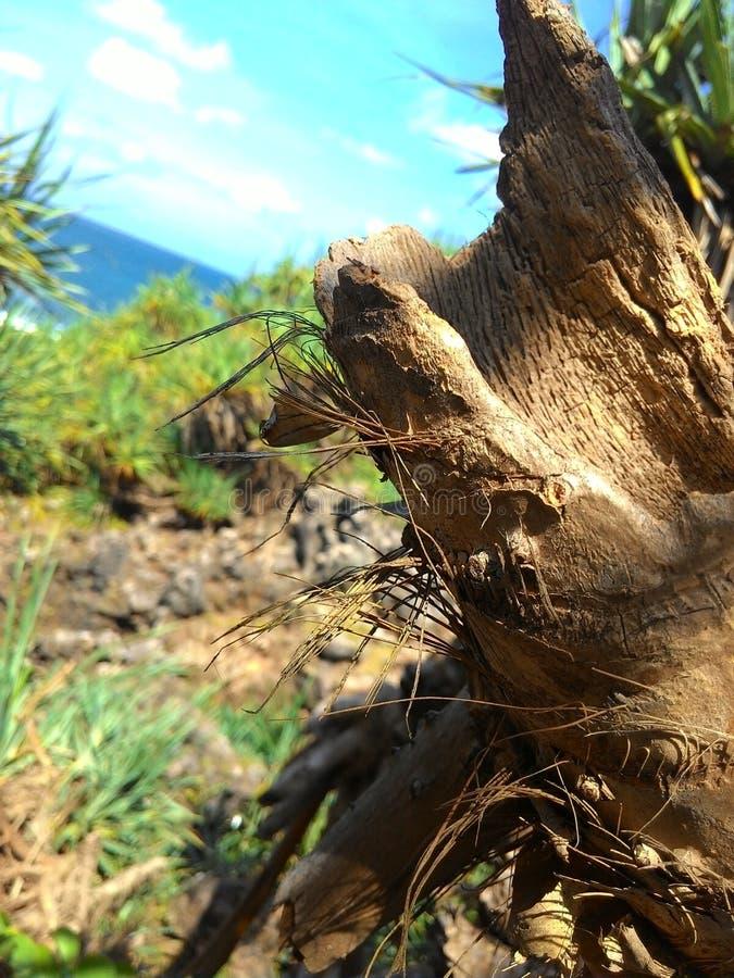 Fotografía del árbol de la playa imagenes de archivo