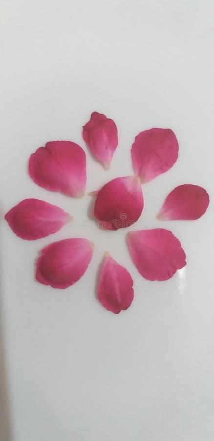 Fotografía hermosa de los pétalos color de rosa para las tarjetas del día de San Valentín fotos de archivo