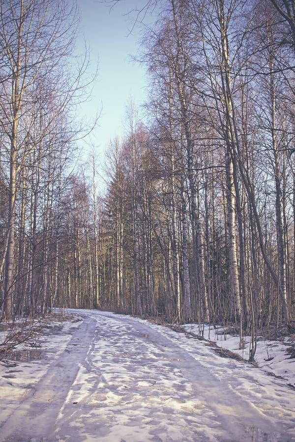 Fotografía hermosa del específico de la estación del invierno Árboles grandes que se colocan altos y orgullosos en una calzada/un foto de archivo