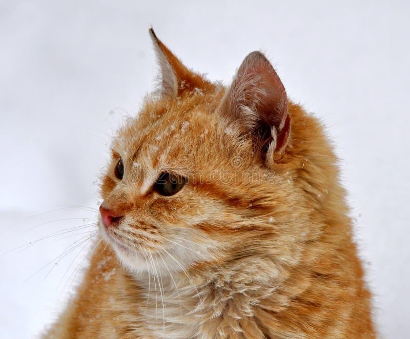 Fotografía hermosa joven de la acción del gato nacional foto de archivo libre de regalías