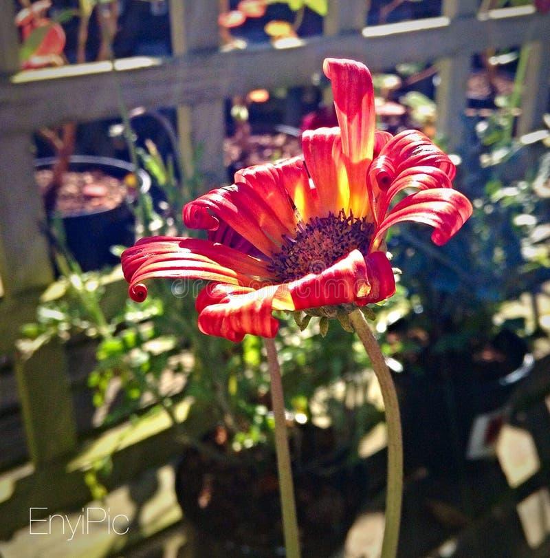 Fotografía imponente de la flor imágenes de archivo libres de regalías