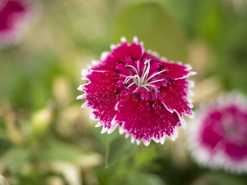 Fotografía macra de la flor salvaje imagen de archivo libre de regalías