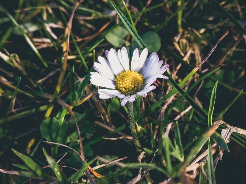 Fotografía macra de la planta de la flor blanca durante d3ia fotografía de archivo libre de regalías