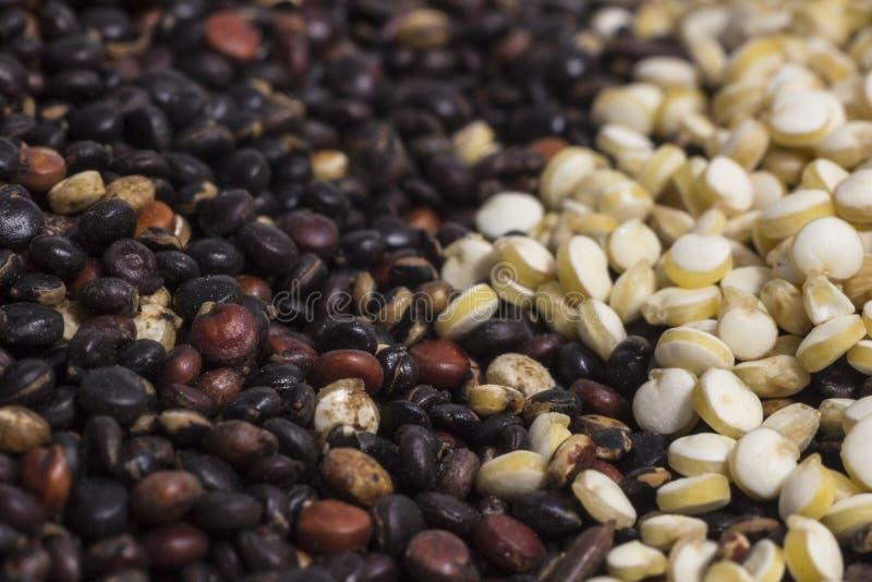 Fotografía macra de los granos de la quinoa imágenes de archivo libres de regalías
