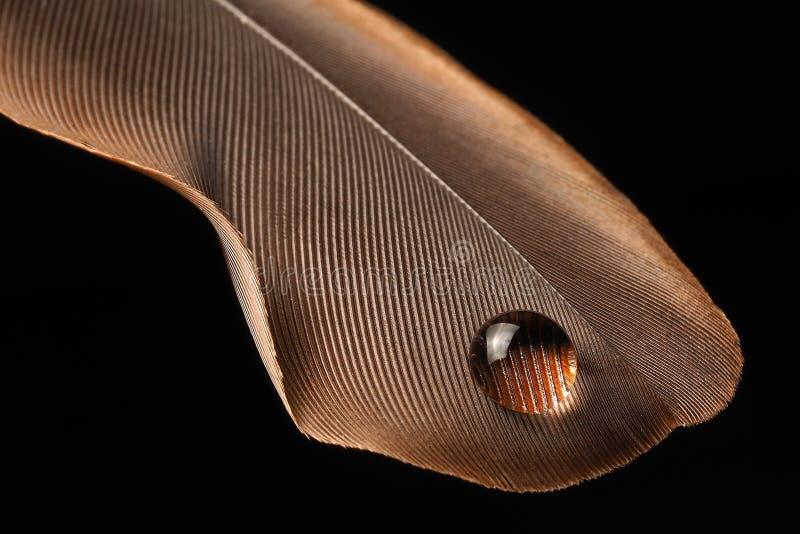 fotografía macra del descenso del agua en fondo marrón del negro de la pluma fotos de archivo libres de regalías