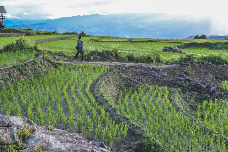 Fotograf bierze fotografię ryżu tarasu irlandczyka pole zdjęcie royalty free