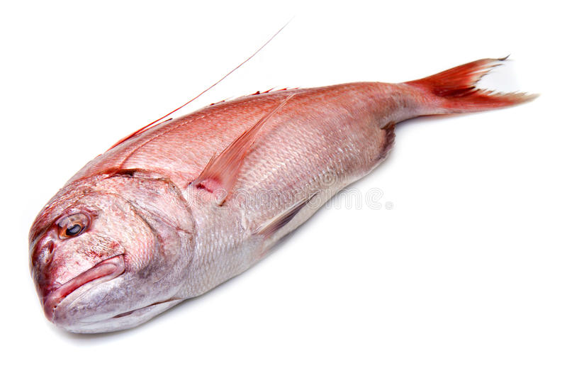 Fotograf czerwieni ryba odizolowywająca na bielu fotografia stock