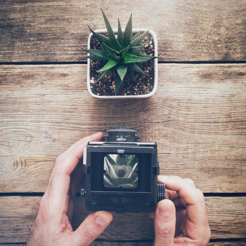 Fotograf, der antike Kamera hält und ein Foto von Succulent macht lizenzfreie stockfotos