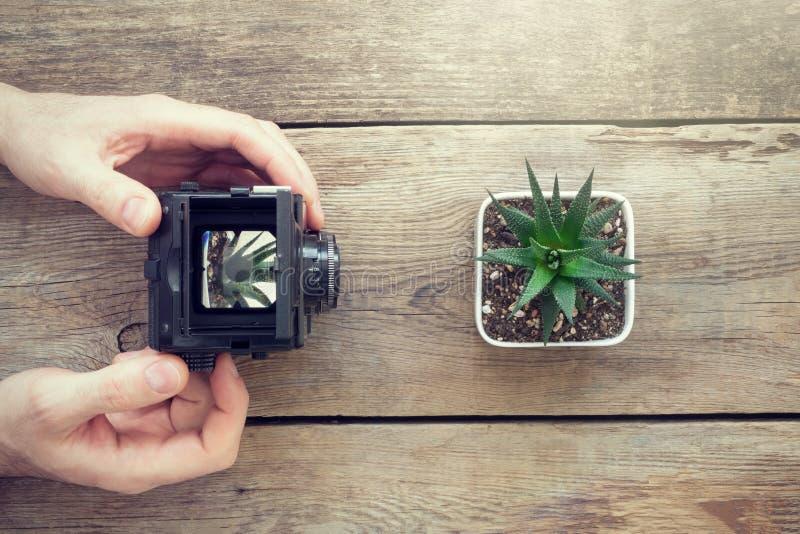 Fotograf, der ein Foto von Succulent unter Verwendung der antiken Kamera macht stockbilder