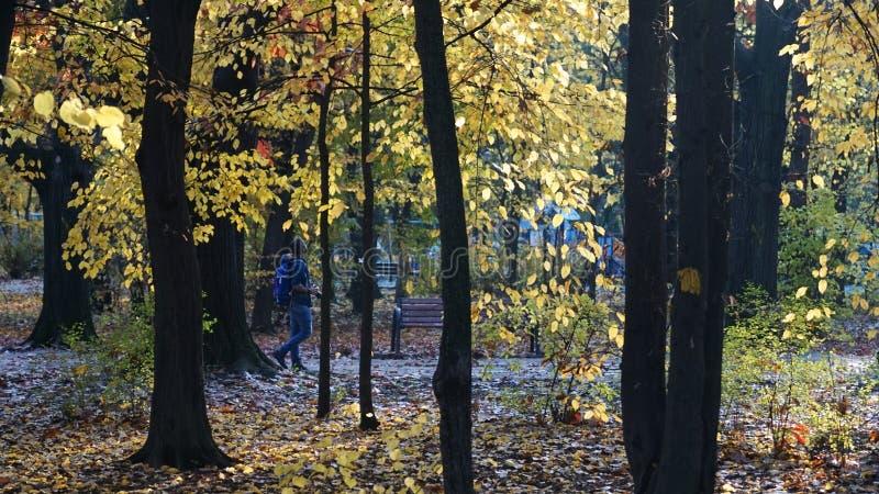 Download Fotograf im Park stockbild. Bild von gasse, atmosphäre - 106802033
