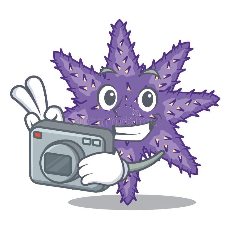 Fotograf purpurrote Starfish in der Zeichenform vektor abbildung